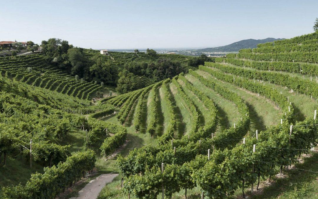 La cultura del vino en Italia
